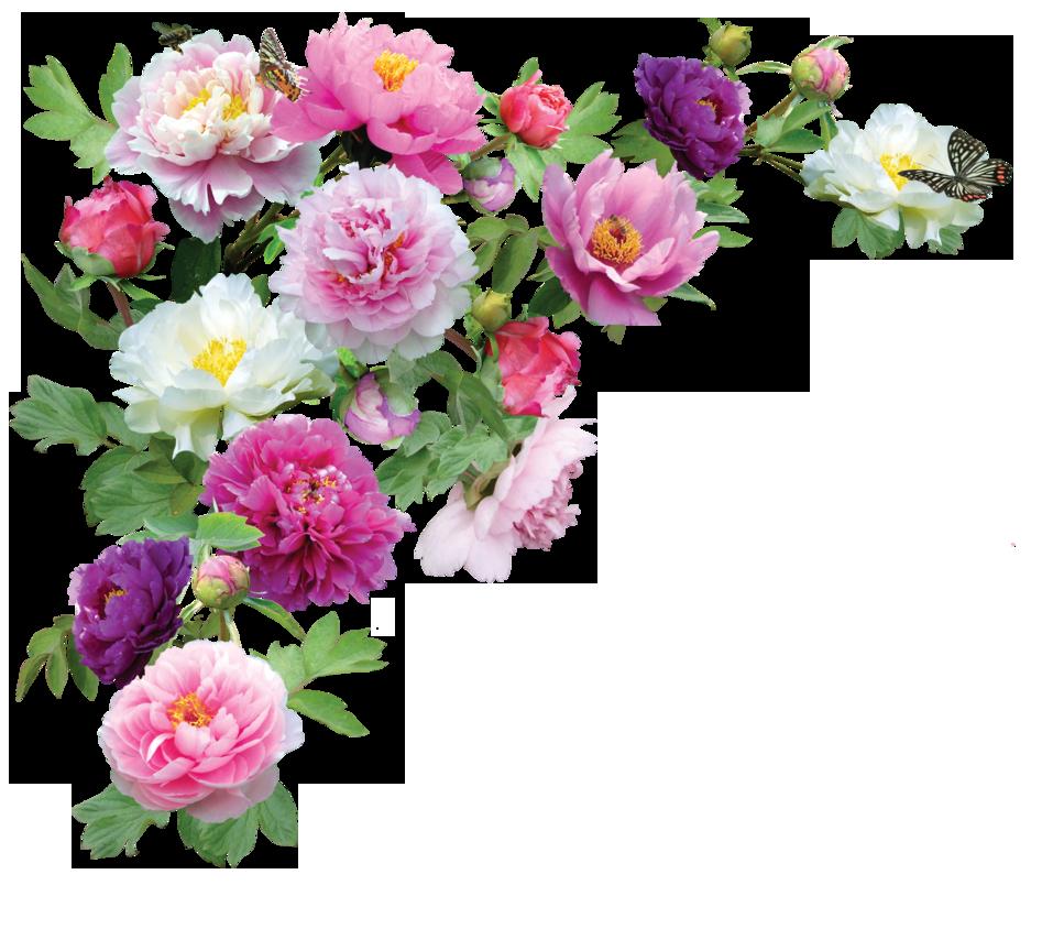 flori oferta luna femeii